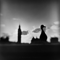 The Elizabeth Tower and a duck - フィルム写真