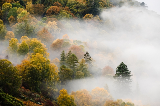 Mist over trees Lake District - Landscape Photography