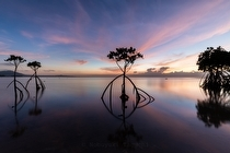 Landscape Photography Mangrove - landscape photography