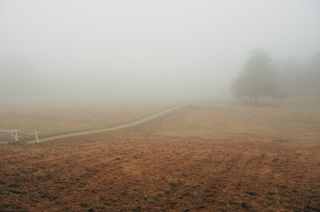 Foggy Days - Photo 4175